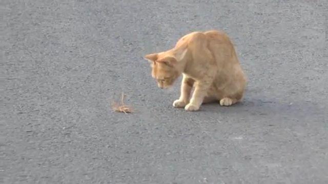 Et Yiyen Dev Örümcek Kedi İle Karşılaşırsa