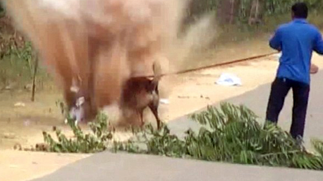 Hindistan'da Mayına Basan Köpek Yara Almadan Kurtuldu